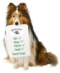 basic dog training commands 1