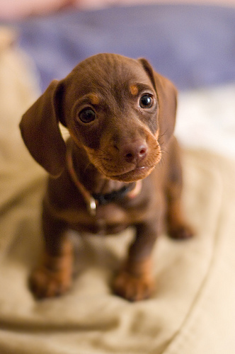 dog breeds list. Small Dog Breeds - List of