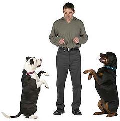 dog training tips