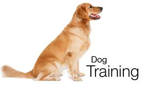 dog training 1
