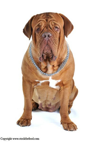 dog breeds list. large dog breeds list. list of