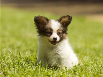 list of dog breeds from A-Z