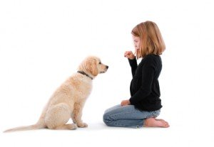 basic dog training commands