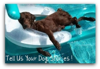 Your Dog Stories
