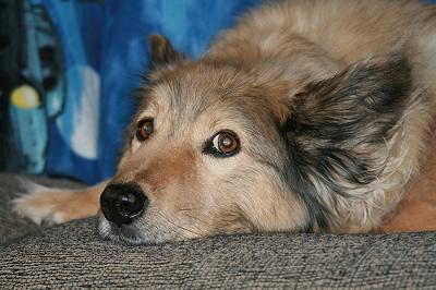 lazy dog breeds - photo #49