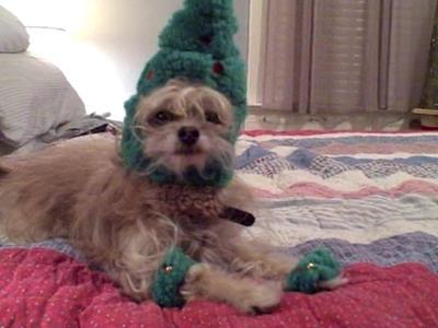 Dressed up like a Christmas tree.